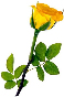 Friendship Day Yellow Rose Photo