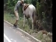 foolish drunk man falls from horse video