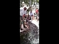 catching fish turns tragic video videos
